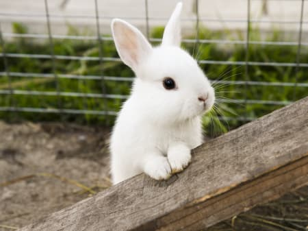 Are rabbits rodents?, Charlotte Vets