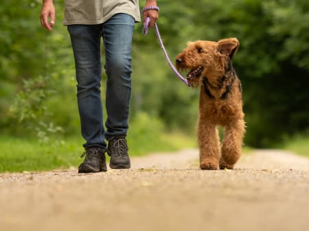 Lyme Disease in Dogs, Charlotte Vets