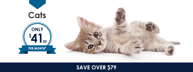 Cats | Providence Animal Hospital | Charlotte & Waxhaw Veterinarian