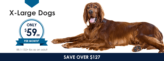 Extra Large Dogs | Providence Animal Hospital | Charlotte & Waxhaw Veterinarian