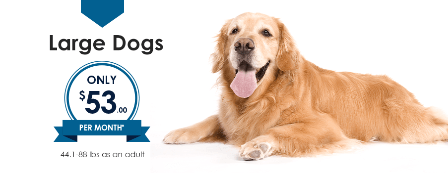 Large Dogs | Providence Animal Hospital | Charlotte & Waxhaw Veterinarian