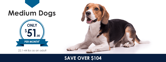 Medium Dogs | Providence Animal Hospital | Charlotte & Waxhaw Veterinarian