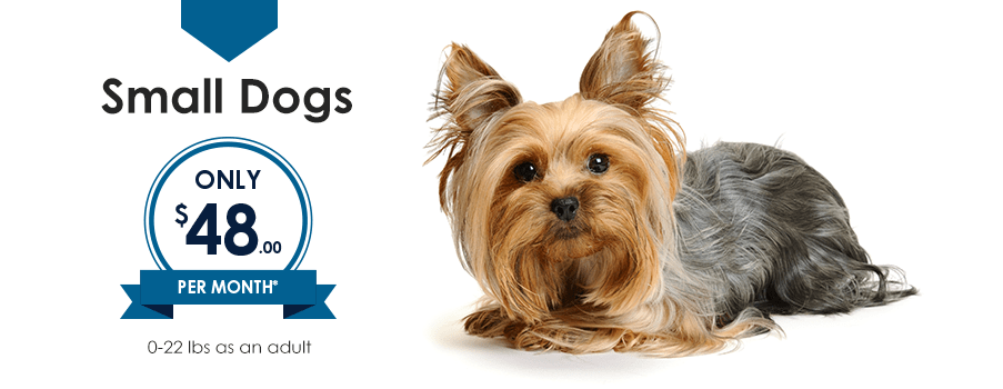 Small Dogs | Providence Animal Hospital | Charlotte & Waxhaw Veterinarian